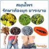 สมุนไพรยาระบาย สมุนไพรรักษาท้องผูก สมุนไพร สมุนไพรไทย
