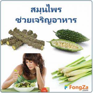 สมุนไพรช่วยเจริญอาหาร สมุนไพรแก้เบื่ออาหาร สมุนไพร สมุนไพรไทย