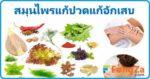 สมุนไพรแก้ปวด สมุนไพรแก้อักเสบ สมุนไพรไทย