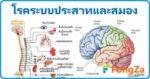 โรคประสาท โรคสมอง โรคระบบประสาทและสมอง