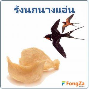 รังนกนางแอ่น สรรพคุณของรังนกนางแอ่น ประโยชน์ของรังนกนางแอ่น รังนก