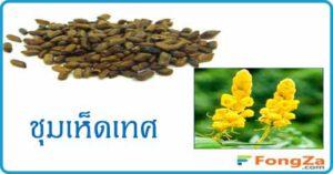 ชุมเห็ดเทศ สมุนไพร สมุนไพรไทย