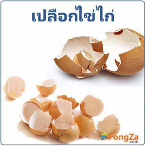 เปลือกไข่ ประโยชน์ของเปลือกไข่ไก่
