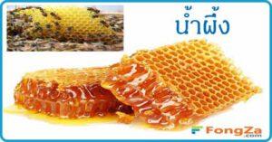 น้ำผึ้ง สมุนไพร สมุนไพรไทย