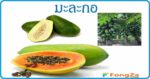 มะละกอ สมุนไพรดูแลเหงือก สมุนไพรดูแลฟัน สรรพคุณของมะละกอ