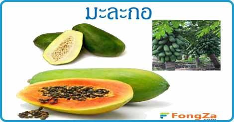 มะละกอ สมุนไพร ผลไม้ สรรพคุณของมะละกอ