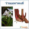 ว่านมหาหงส์ สมุนไพรไทย ประโยชน์และโทษของว่านมหาหงส์