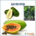 มะละกอ พืชพื้นบ้าน สมุนไพร ประโยชน์และโทษของมะละกอ