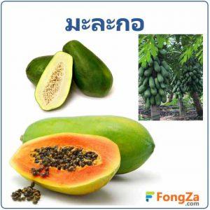 มะละกอ ผลไม้ สมุนไพร สรรพคุณของมะละกอ