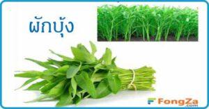 ผักบุ้ง สมุนไพร สมุนไพรไทย