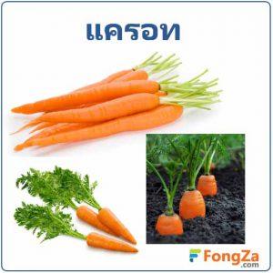 แครอท ต้นแครอท ผักสวนครัว สมุนไพร