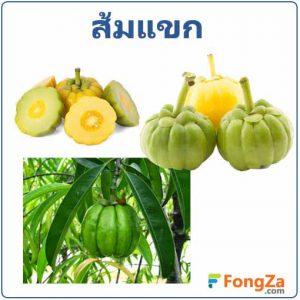 ส้มแขก สมุนไพร สมุนไพรราเปรี้ยว สรรพคุณของส้มแขก