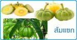 ส้มแขก สมุนไพรช่วยขับปัสสาวะ สมุนไพรไทย
