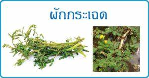ผักกระเฉด สมุนไพร สมุนไพรไทย