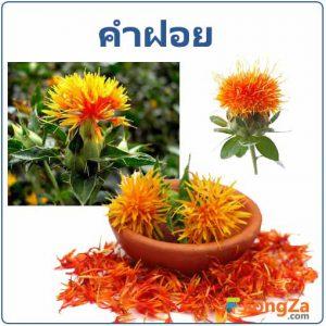 ดอกคำฝอย สมุุนไพร สรรพคุณของดอกคำฝอย สมุนไพรไทย