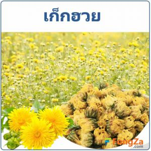 เก็กฮวย สรรพคุณของเก็กฮวย ดอกเก็กฮวย สมุนไพร