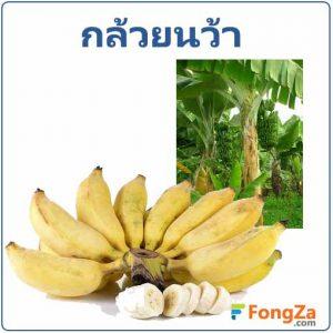 กล้วยน้ำว้า ผลไม้ สมุนไพร สรรพคุณของกล้วยน้ำว้า