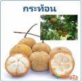 กระท้อน ผลไม้ สมุนไพรไทย สรรพคุณแก้ท้องเสีย ช่วยขับลม