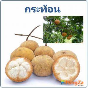 กระท้อน ผลไม้ สมุนไพร สมุนไพรไทย
