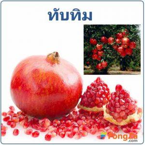 ทับทิม สรรพคุณของทับทิม สมุนไพร ผลไม้
