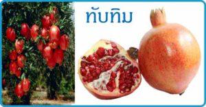 ทับทิม สมุนไพร ผลไม้ สรรพคุณของทับทิม