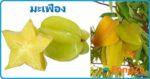 มะเฟือง สมุนไพรรักษาแผล ผลไม้ สรรพคุณของมะเฟือง