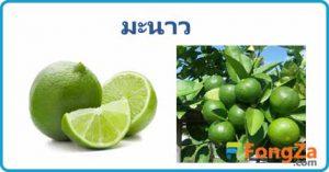 มะนาว สมุนไพร ต้นมะนาว สรรพคุณของมะนาว