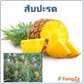 สับปะรด ผลไม้แสนอร่อย สมุนไพร สารพัดประโยชน์