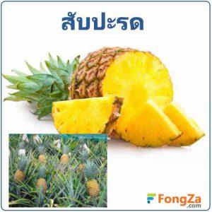 สับปะรด ผลไม้ สมุนไพร สรรพคุณของสับปะรด