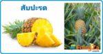 สับปะรด สมุนไพร ผลไม้ สรรพคุณของสับปะรด