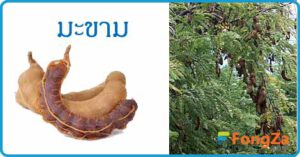 มะขาม สมุนไพร สมุนไพรไทย ผลไม้